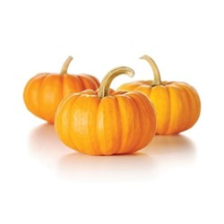Picture of Pumpkin /pc.