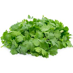 Picture of Cilantro /pc.