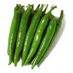 Picture of Green Long Chilli
