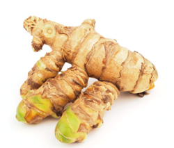 Picture of Fresh Turmeric Root White