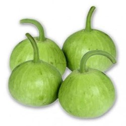 Picture of Round Opo Squash